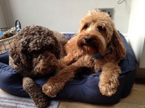 Hugo and Poppy